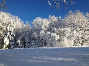 Winter in Ashfield