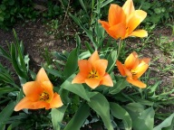 Bridge of flowers (13)