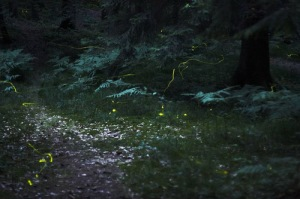 fireflies-glowing-in-field