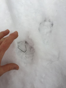 Otter Tracks by Arianna