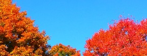 Autumn leaves at Ashfield Fall Festival