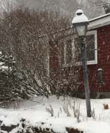 Chickadees on a snowy day