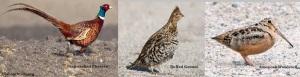 Pheasant-Grouse-Woodcock