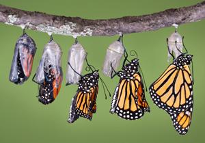 https://wwww.monarch-butterfly.com
