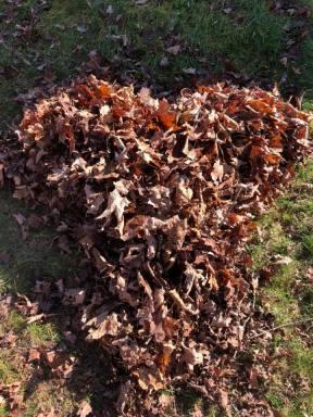 Heart leaf pile