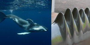 Biomimicry example: whale fin to wind turbine blade design