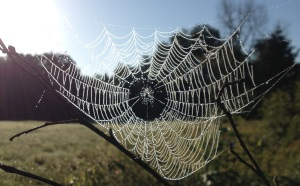 Spiderweb at edge of swamp by Arianna
