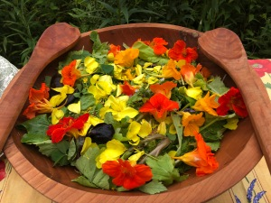 Late August salad with Nasturtium, evening primrose, goldenrod, chicory, and yellow Wood Sorrel